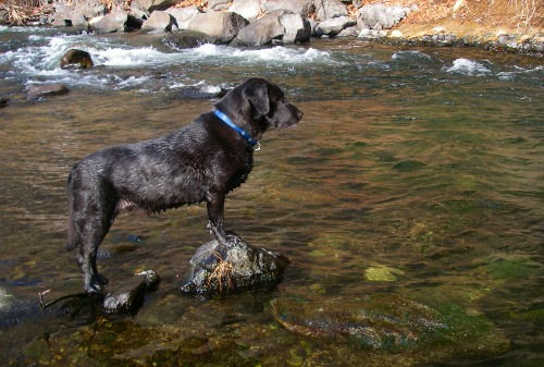 Wally the Wonderdog on the Upper Sacramento