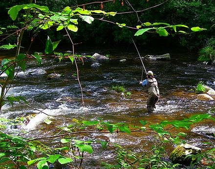 Ian Rutter fishing Hazel Creek