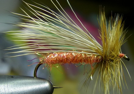 The Singlebarbed Caddis