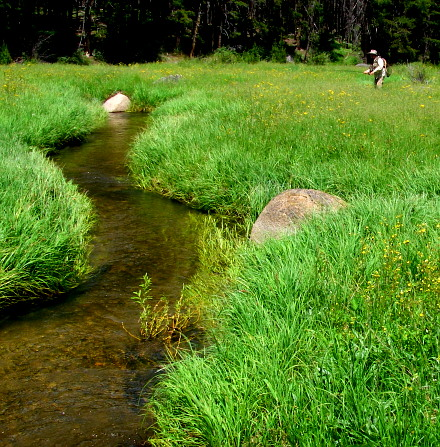 Fly fishing a small Montana meadow stream